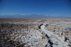 Path in a salt desert Stock Photography