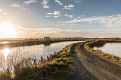 Path in the salt marshes Stock Image