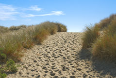 Path through sand dunes. Well-trodden path through sand dunes to sandy beach beyond stock photography