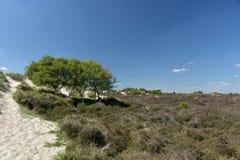 Path through sand dunes, Studland Nature Reserve Stock Photo