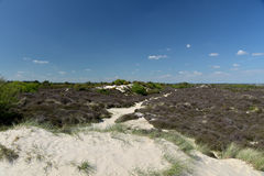 Path through sand dunes, Studland Nature Reserve Stock Image