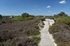 Path through sand dunes, Studland Nature Reserve Royalty Free Stock Photos