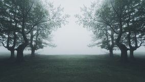 path in scary foggy forest Stock Photography