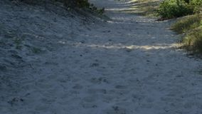 Path from the sea sand. In the autumn forest, a path of sand leads to the sea, the Curonian Spit stock video footage