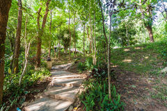 Path in the shady green garden Stock Photography