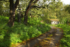 Path Into Shed. Landscape with path into a shed in the woods Stock Photos
