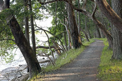 Path by the shore on the Gabriola Island Stock Images