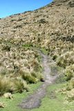 Path on the side of a mountain in the Antisana Ecological Reserve, Ecuador Royalty Free Stock Photos