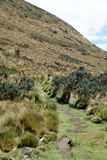 Path on the side of a mountain in the Antisana Ecological Reserve, Ecuador Stock Photo
