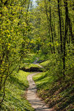 Path of small plates in the forest park Stock Photos