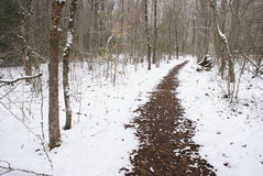 Path Through the Smokies. Snow covered trail in the Great Smoky Mountains National Park Stock Images