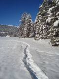 Path in the Snow. Trace in snow, a path leading into the distance Stock Photos