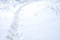 Path in the snow Stock Images