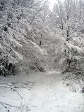 Path in snow. A path opening in the forest covered in snow Royalty Free Stock Photo