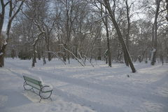 Path in the snow with bench and trees Stock Photo