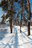 The path in the snow on a bright sunny day. The trees powdered with snow Stock Images