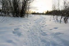 Path in the snow. In a cold winter day Stock Photos