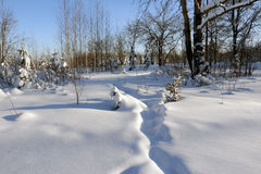 Path in the snow. In a cold winter day Royalty Free Stock Images