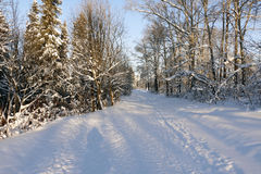 Path in the snow. In a cold winter day Royalty Free Stock Photography