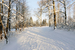 Path in the snow. In a cold winter day Stock Image