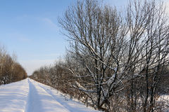 Path in the snow in a cold. Winter day Royalty Free Stock Photography