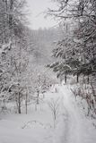 Path in snow-covered forest. Path through the snowy forest, after snowfall in Russia, beautiful nature, fluffy trees Royalty Free Stock Image