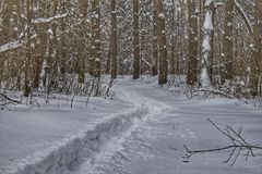 A path in the snow-covered forest. Trees in the snow Royalty Free Stock Photo