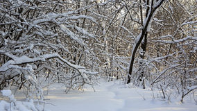Path in snow drifts through the trees. Royalty Free Stock Photography
