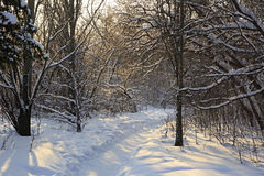 Path in snow drifts through the trees. Royalty Free Stock Photo