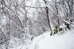 The path of snow in Fukushima, Japan. The walking path through frozen forest in Fukushima, Japan royalty free stock photography