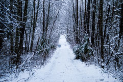 Path In The Snow. A long path in the middle of a snowy forest in the winter time Royalty Free Stock Photo