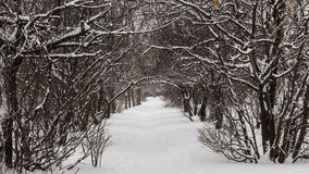 Path through the snow. A path through the park after winter day stock image
