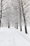 Path in the snow Stock Image