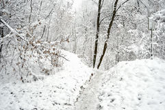 Path at a snowbound winter forest. Stock Photos