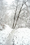 Path at a snowbound winter forest. Stock Images