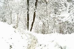 Path at a snowbound winter forest. Royalty Free Stock Photo