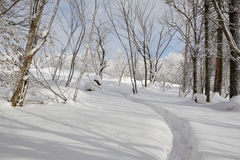 The path on the snowfield Royalty Free Stock Photography