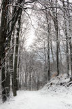 Path in a Snowy Beech Forest. Snow covered white path in beech forest. The sky is barely seen through the dark silhouettes of the trees Stock Photography