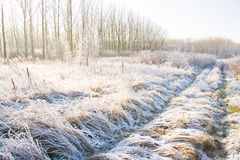 Path in a snowy field Stock Photo