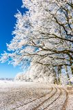 Path on snowy field under frozen branches Royalty Free Stock Photography
