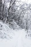 Path in the snowy forest stock photography