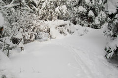 Path through a snowy forest, horizontal Royalty Free Stock Photography