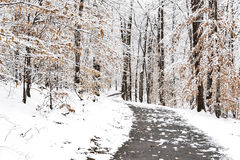 Path in a snowy forest landscape Royalty Free Stock Photography