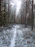 Path in snowy forest 2. A path leads to the light in a snowy forest Royalty Free Stock Photo