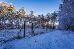 Path in a snowy forest in the morning Royalty Free Stock Photo