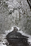 Path through snowy woods Royalty Free Stock Images