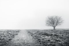 Path with solitary tree Stock Photography