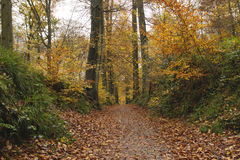 Path in Sonian Forest. In autumn, Brussels Stock Photo