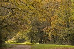 An autumn path on Southampton Common stock images