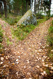 Path Split. A path is split in the forest with two options Royalty Free Stock Images